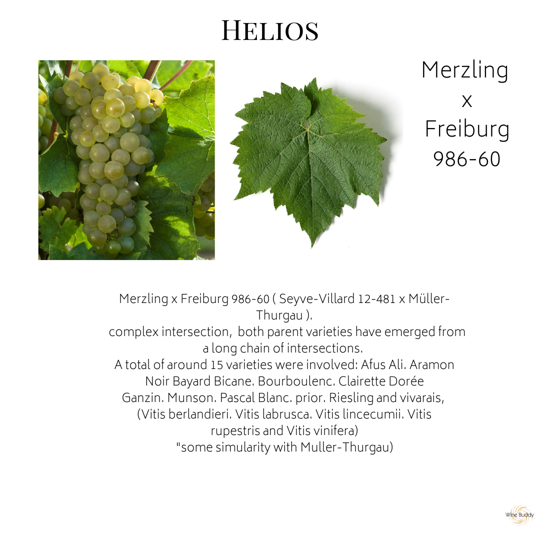 Helios Grape